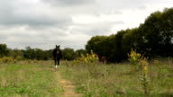 Walking in nature outdoor near horses - gimbal steadicam HD video footage video