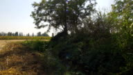 Walking in the countryside near an irrigation ditch video