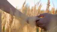 Walking in the Fields of Gold video