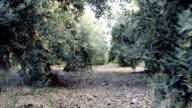 Walking in the olive garden video