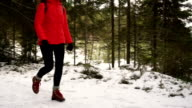 walking in the snowy forest video