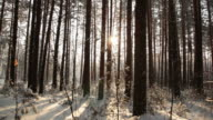 Walking in the woods, GlideCam shot video