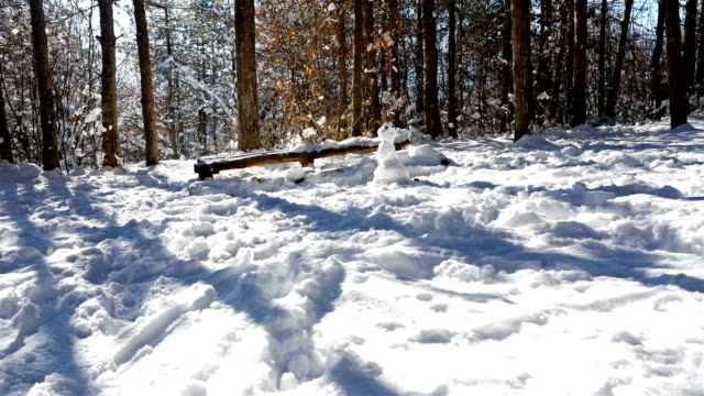 Walking in the woods in snowy winter, steadicam shot video