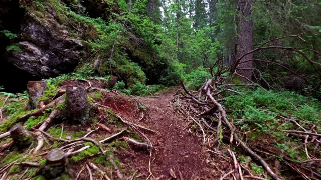 Walking in the woods of Dolomites -  Trentino - Italy video