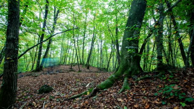 Walking in the woods video