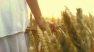 HD SLOW MOTION: Walking In Wheat Field video