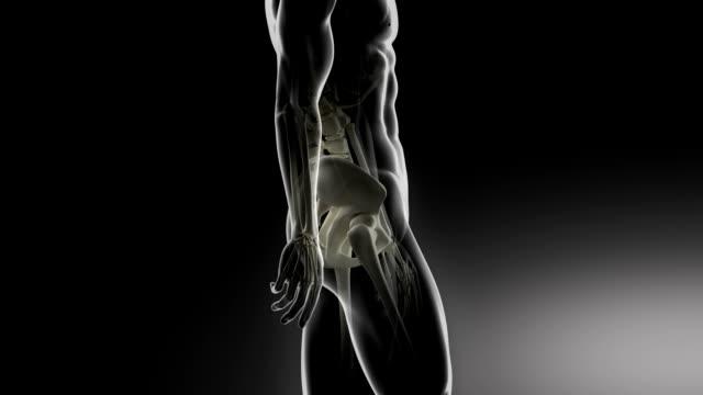 Walking man focused on pelvis parts video