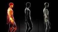 Walking man scan - in loop video