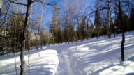 Walking on a Snow Covered Path 2 video
