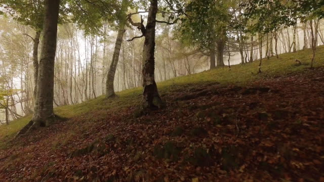 Walking outdoor thru trees in woods forest with bad weather fog overcast day. 4k POV forward nature shot video