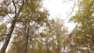 Walking outdoor thru trees in woods forest with bad weather fog overcast day. 4k POV side nature shot video