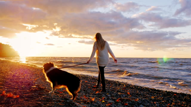 Walking the dog along the bank of a lake or the sea. Dramatically beautiful sunset and orange sky. A woman walking with a pet video