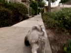 Walking the Dog: Puppy  POV / Point of View video