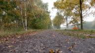Walking the path along birch trees in autumn video