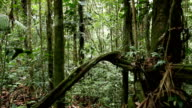 Walking through a tangle of lianas in rainforest video