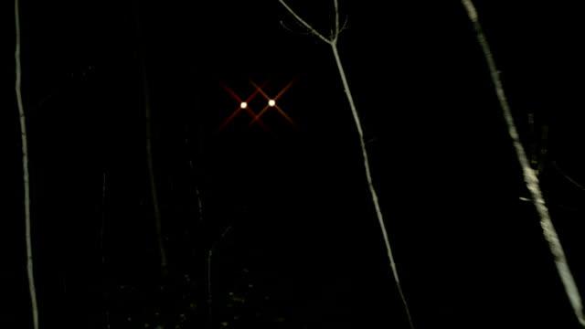 POV walking through dark spooky forest at night towards lights video