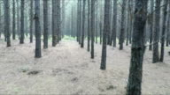 Walking through forest, Mpumalanga, South Africa video