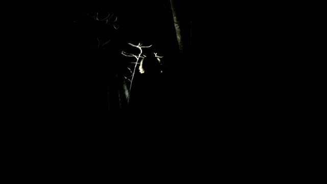 Walking through forest searching with flashlight video