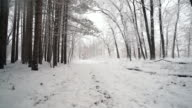 Walking through fresh snow along forest of tall pines.  Ronin Stabilized shot video