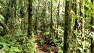 Walking through mossy tropical rainforest video
