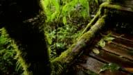 walking way in forest on rain seasons video