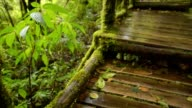 walking way in rain seasons video