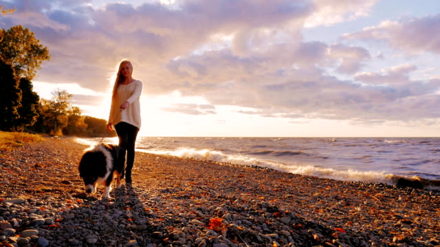 Walking with a dog in the sunset. Young woman is on a leash Australian shepherd dog on the shore of a lake or the sea. Orange sky in the background video