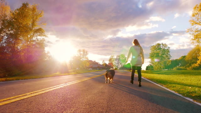 Walking with a dog in the sunset. Young woman is on the leash Australian shepherd dog against a beautiful sky on a clear autumn day. Steadicam slow motion shot video