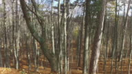walks in autumn forest on sunny day video
