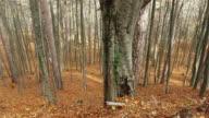 walks in autumn forest video