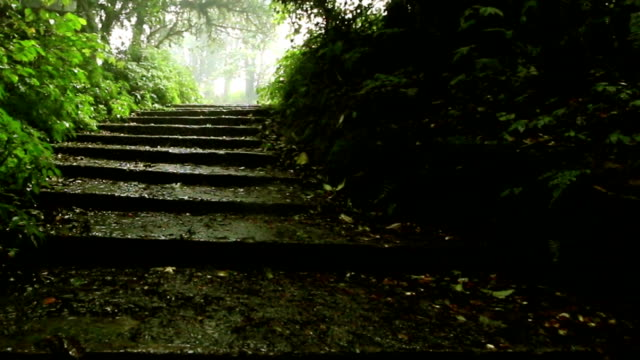 walkway up to deep forest; dolly shot video
