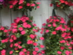 Wall Of Colorful Hanging Flowers video