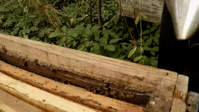 Wall of Hive Beekeeper Fumes And Cleans With Brush Bees Detail video