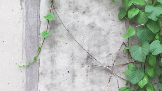 Wall Vines with Textured Wall. video