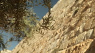 Walls of Jerusalem and an Olive Branch video
