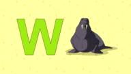 Walrus. English ZOO Alphabet - letter W video