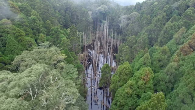 Wangyou Forest,aerial dolly in video