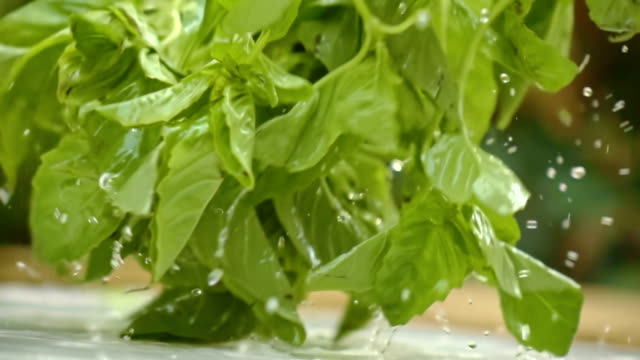 Washing Basil In Slow Motion video