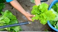 washing vegetables video