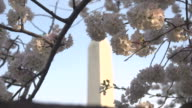 Washington Monument Behind Pink Blossoms video
