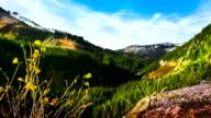Washington State, Mt Rainier, park video