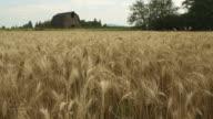 Washington State Wheat Field dolly shot video