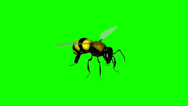 Wasp Bee Swarm Flying on a Green Screen Background video