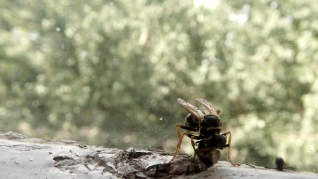 Wasp Eat with Enthusiasm Dead Fly near Body Parts of Different Insects Macro video