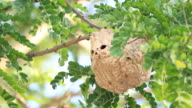 Wasp Hive video