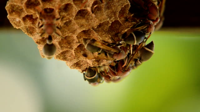 Wasp nest on the roof wall video