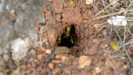 Wasp nest video