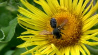wasp on flower. video