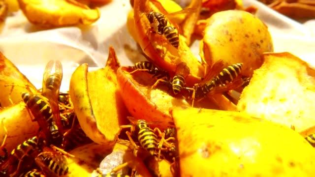 Wasps Creep an Eat Pears POV of  Wasp Macro video