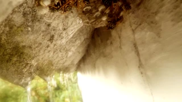 Wasps Freeze in Vespiary under Cornice of Roof Rain Close Up video